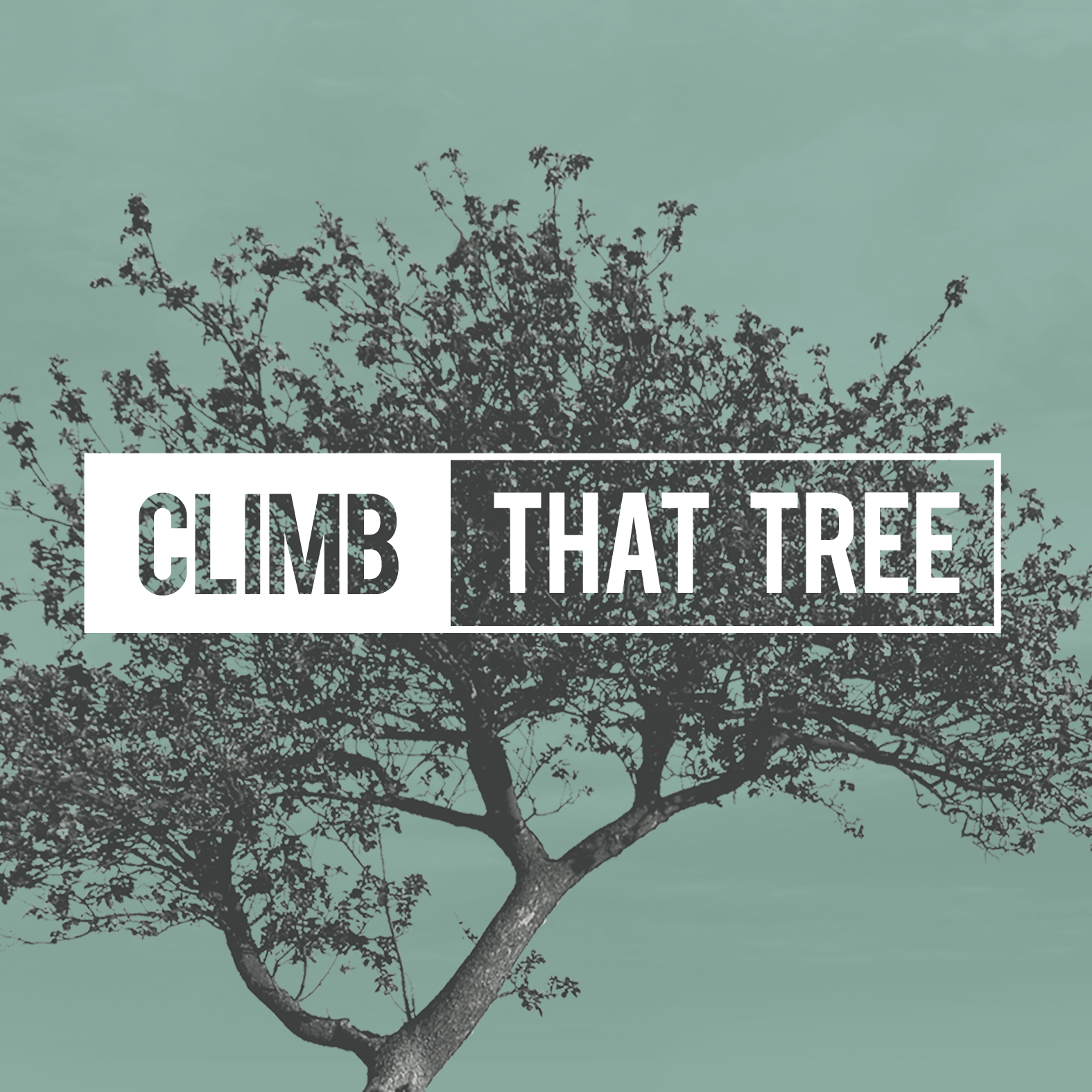Climb That Tree – Senior Honor Day